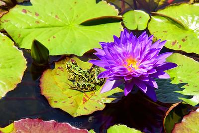 Frog, Enjoying The Weather