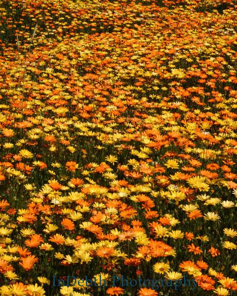 9378 - Flower Bed