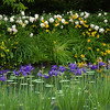 Roses Lilies & Irises