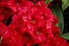 CRay-Flowers-0820