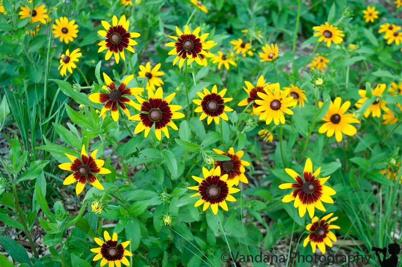 August 3, 2010 - Wildflowers