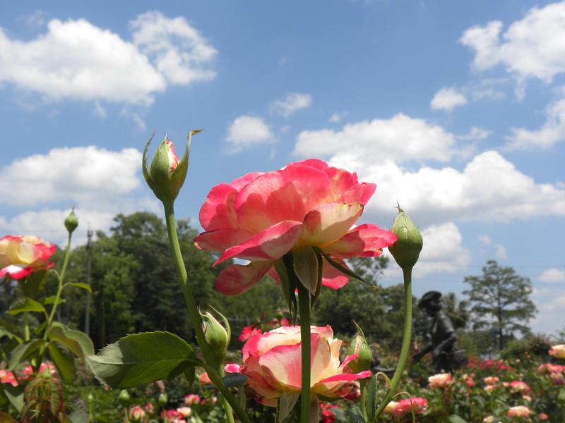 Edisto Gardens, SC