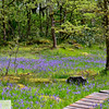 Camassia Nature Area - West Linn Oregon - 187