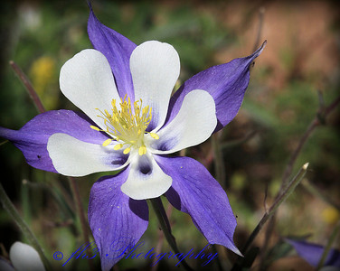 Columbine - Dumont Lake