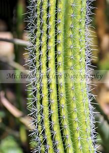 Organ Pipe Cactus - 5 x 7