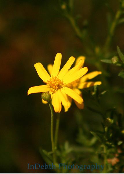 7288 - Flower