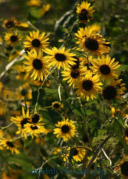 4150 - Wild Flowers
