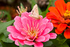 Flowers_MG_5315 copy