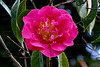 CRay-Flowers-6876