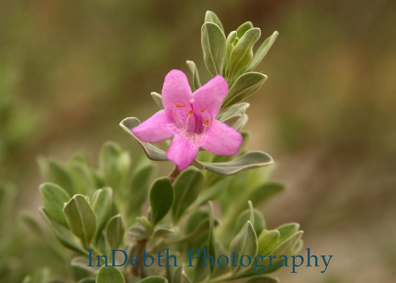 1527 - Sage Flower