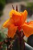 2113 - Flower