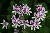CRay-Flowers-0760