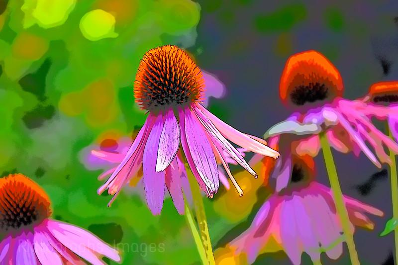 Garden Flowers, Summer 2020