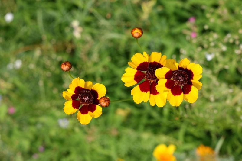 New Flowers1 012