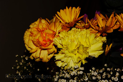 Blooming Yellow Flowers,