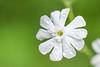 flower smugmug (11 of 26)