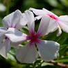 US Botanic Garden-8