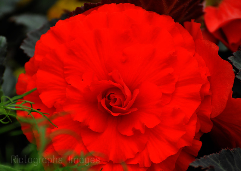 Beautiful Red Flower