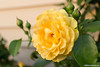 Flowers : Various flower photos
