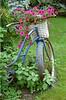 Petunia Bicycle