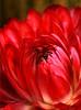 Flower_2896
