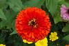 20060904-133222_30D_Flowers_0116