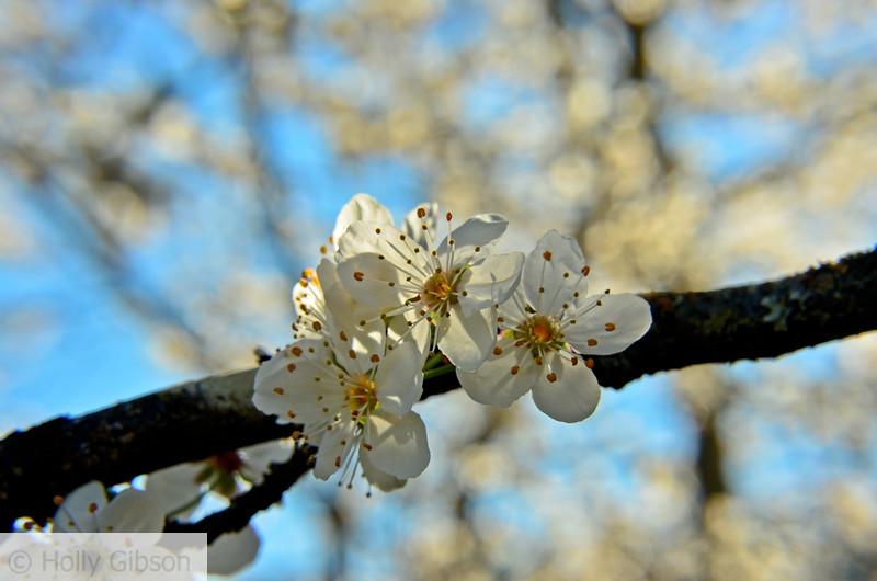 Spring buds - 170