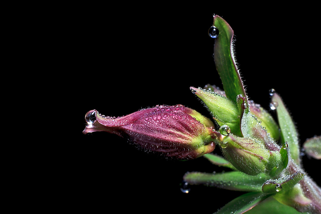 Sweet kiss of morning dew