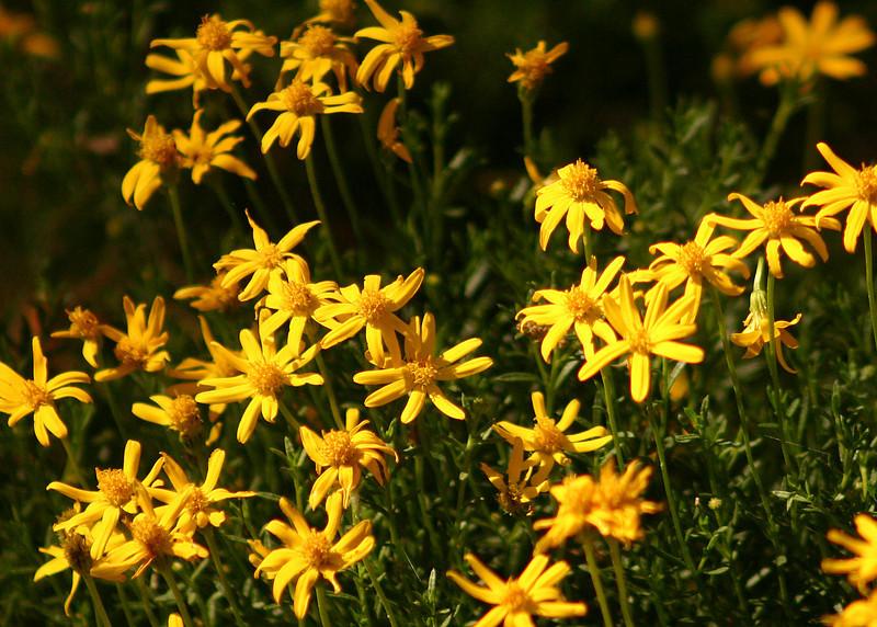 7289 - Wild Flowers