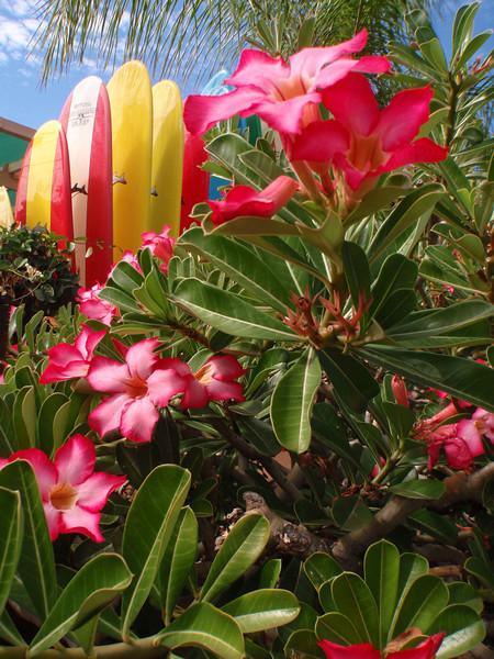 Maui January 2010