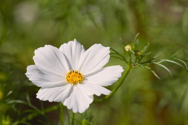 Flower_MG_4053