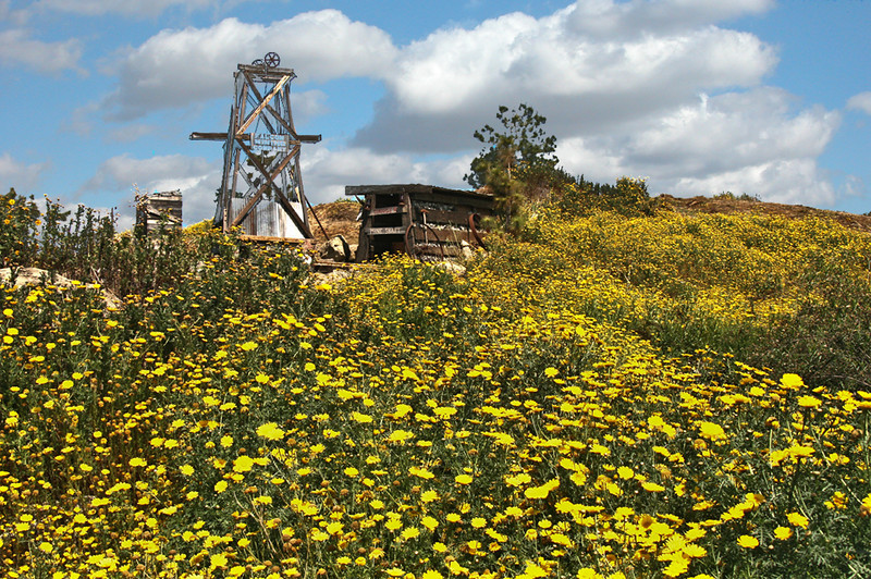 Falcon Mine Daisy Field - Heritage Park - Santa Ana, CA