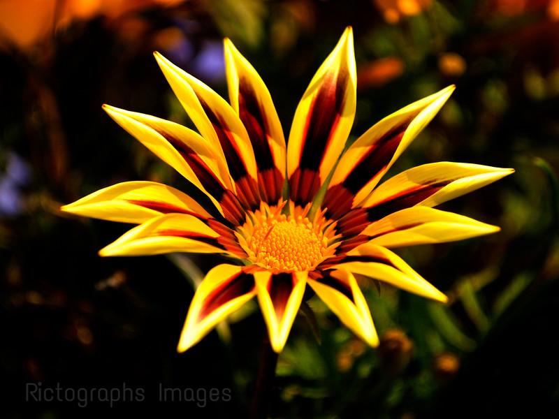 Beautiful Cultivar