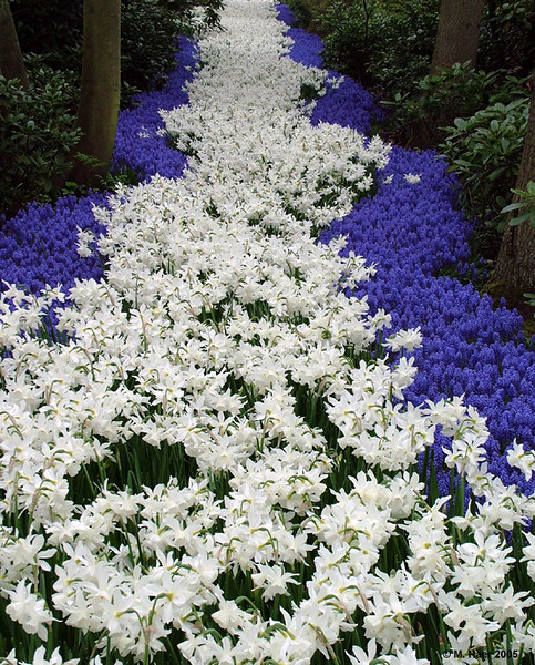 Fragrant Path