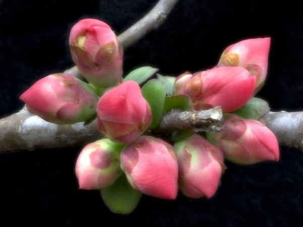 FlowerColoredV2