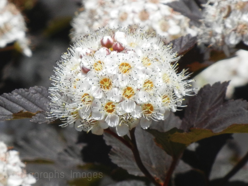 Gorgeous Flowering Shrub