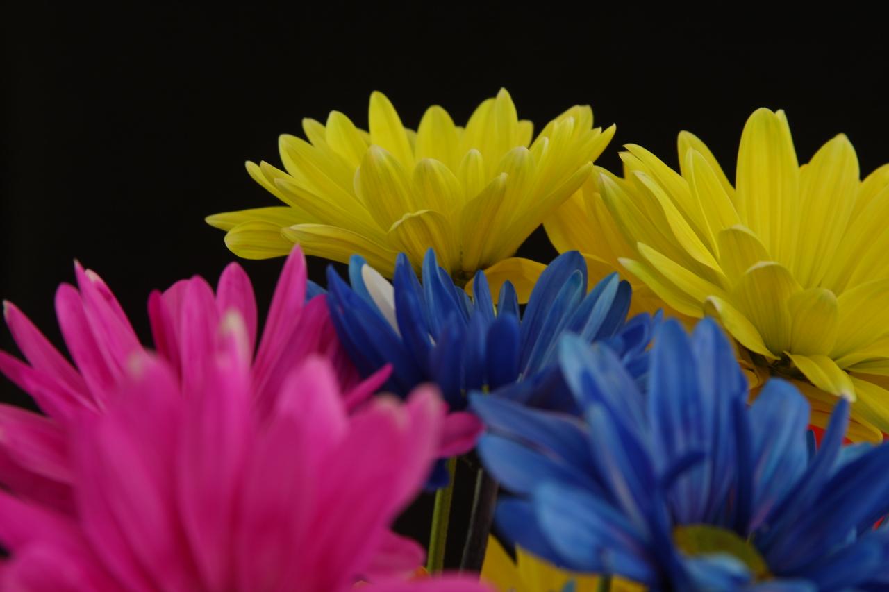 IMG4_13768 Flowers