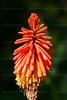 CRay-Flowers-6821