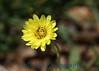 1864 - Flower