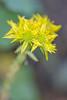 flower smugmug (25 of 26)