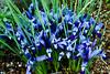 CRay-Flowers-