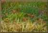 Sommer-Flora