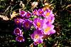 CRay-Flowers-0536