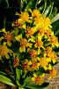 CRay-Flowers-0644