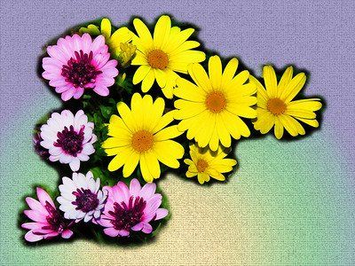 Pretty Garden Flowers, Rictographs Images