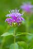 flower smugmug (23 of 26)
