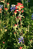 5684 - Wild Flowers