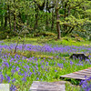Camassia Nature Area - West Linn Oregon - 188