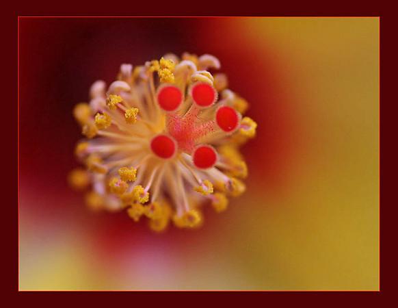 Yellow Hibiscus (113785345)