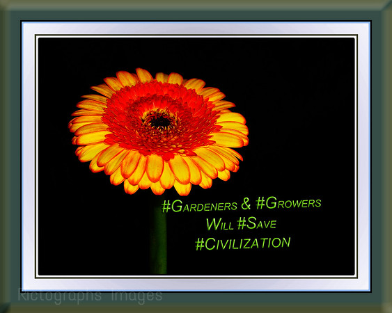#TwitterTip #Create & #Share , Photography, Rictographs Images